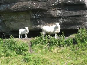 Some local inhabitants