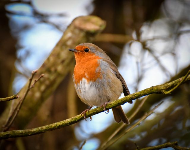 A robin I photographed whilst on a recent walk